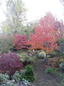 autumn 007